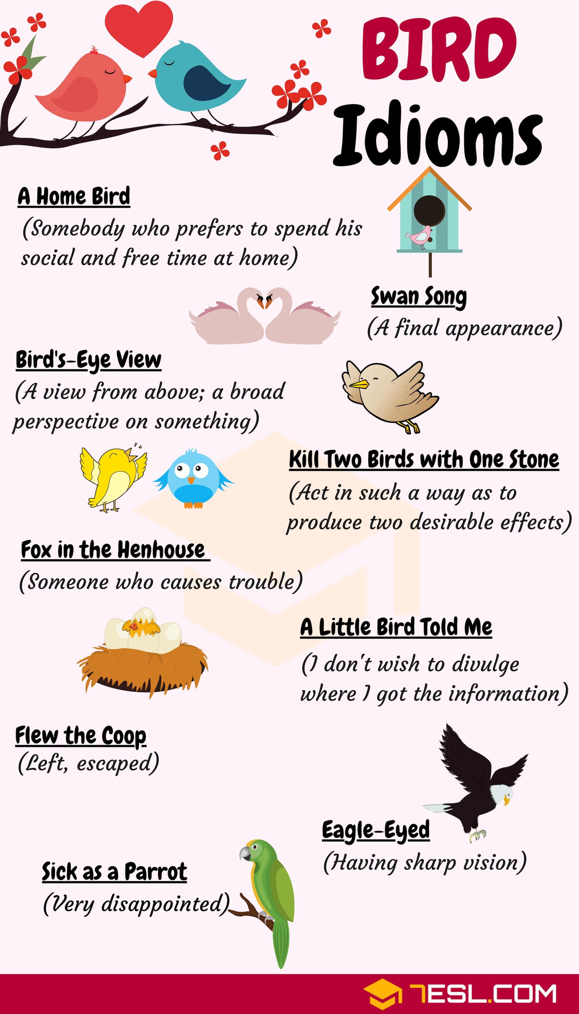 BIRD Idioms