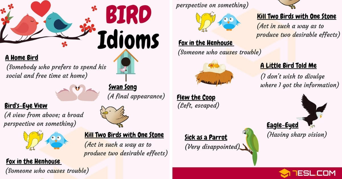 BIRD Idioms: 27 Useful Phrases and Idioms about Birds 1