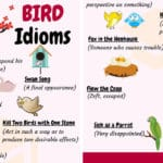 BIRD Idioms: 27 Useful Phrases and Idioms about Birds
