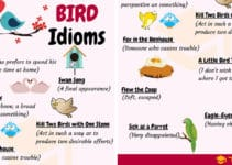 BIRD Idioms: 27 Useful Phrases and Idioms about Birds 4