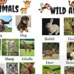 List of Animals in English with Pictures