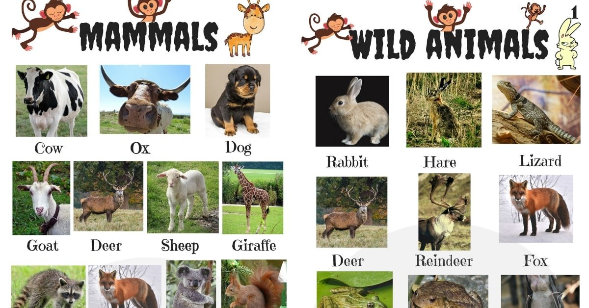 List of Animals in English with Pictures 1