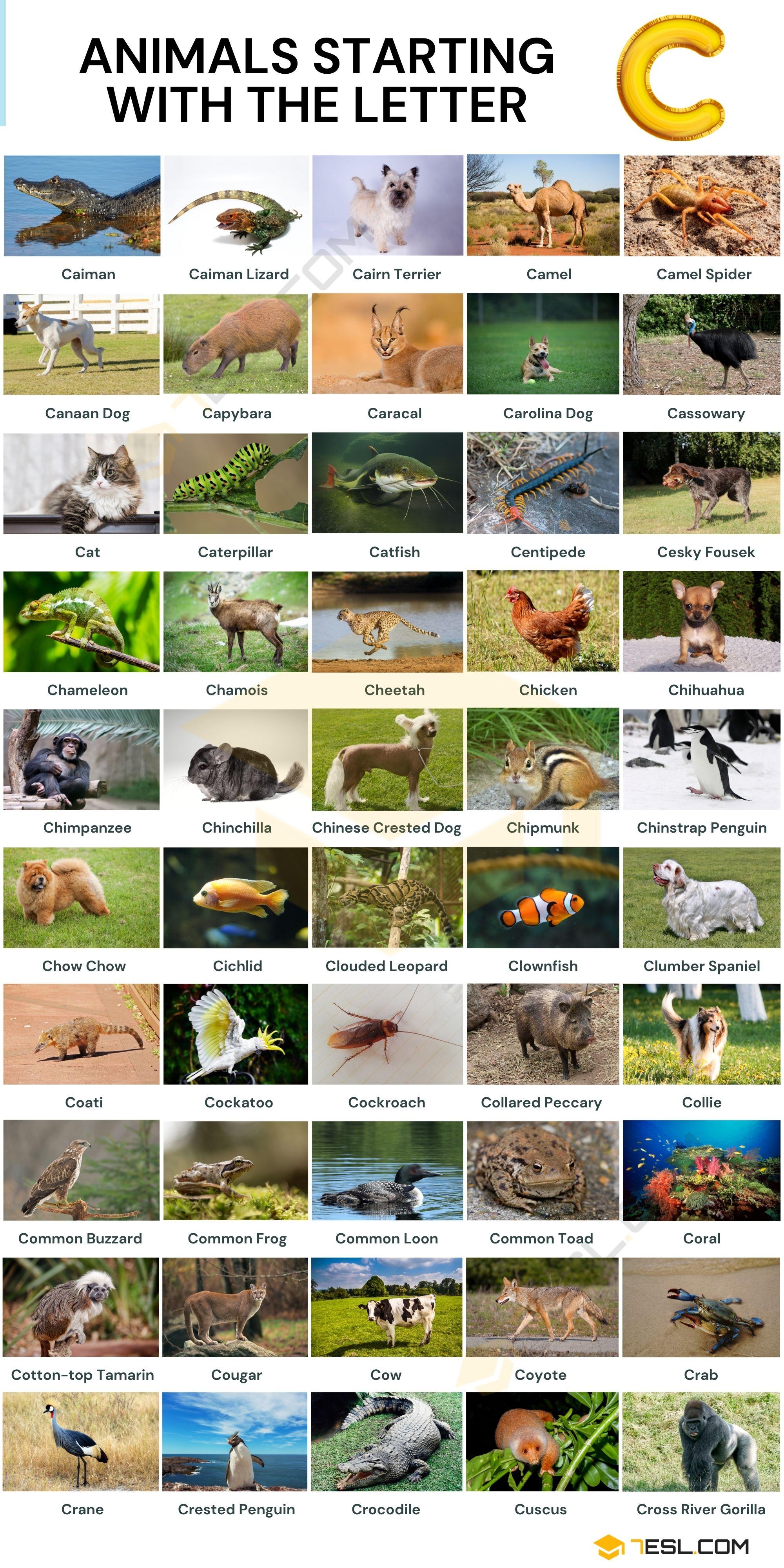 Animals that Start with C