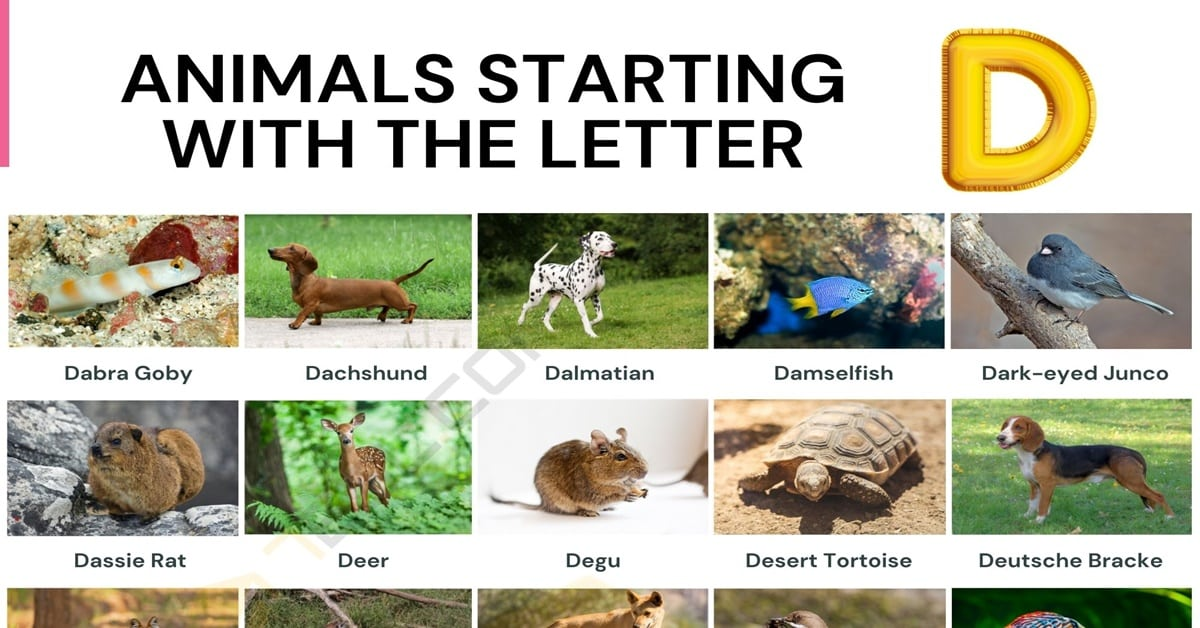 Animals that Start with D
