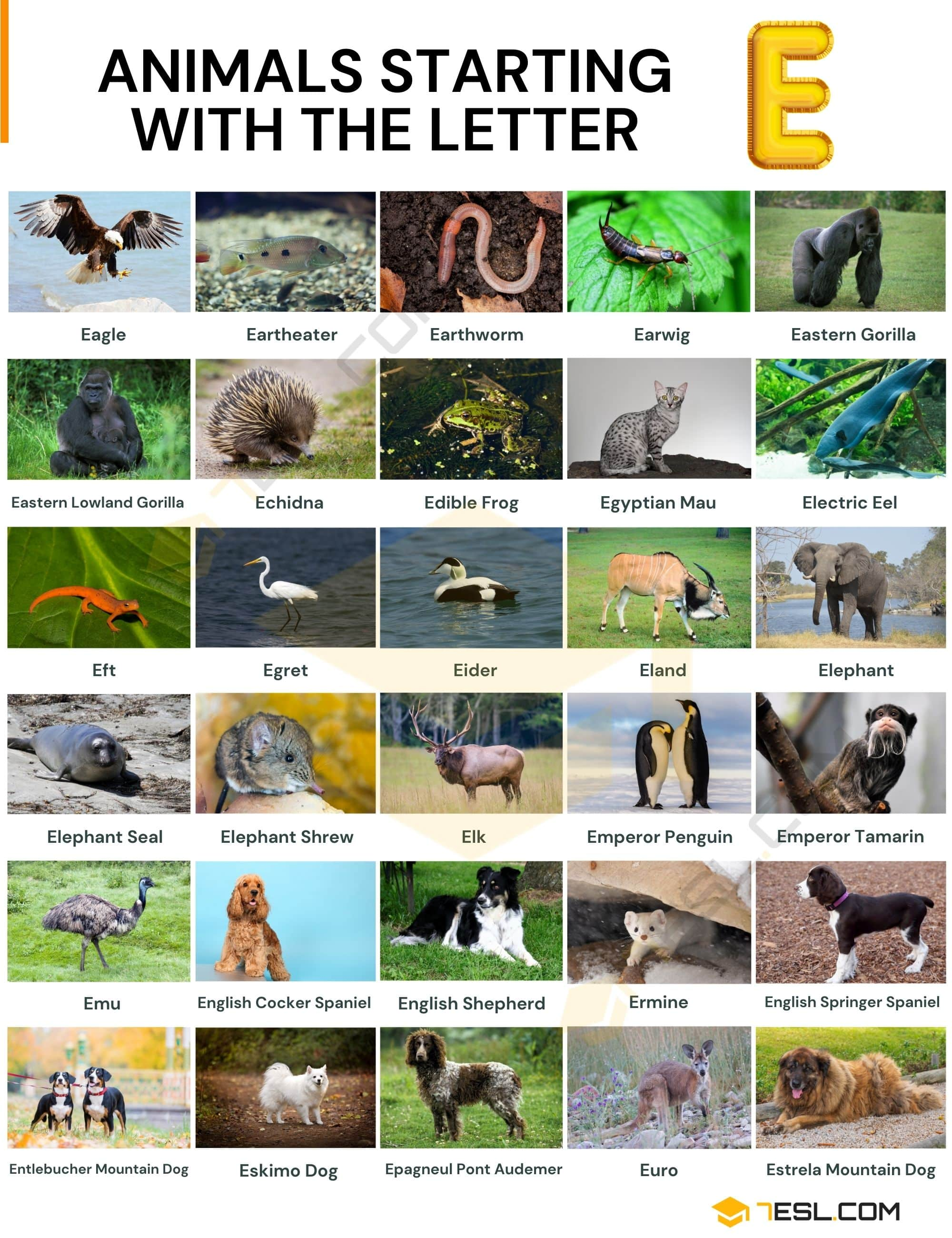 Animals that Start with E