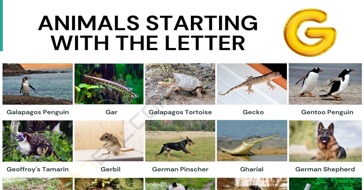 Animals that Start with G