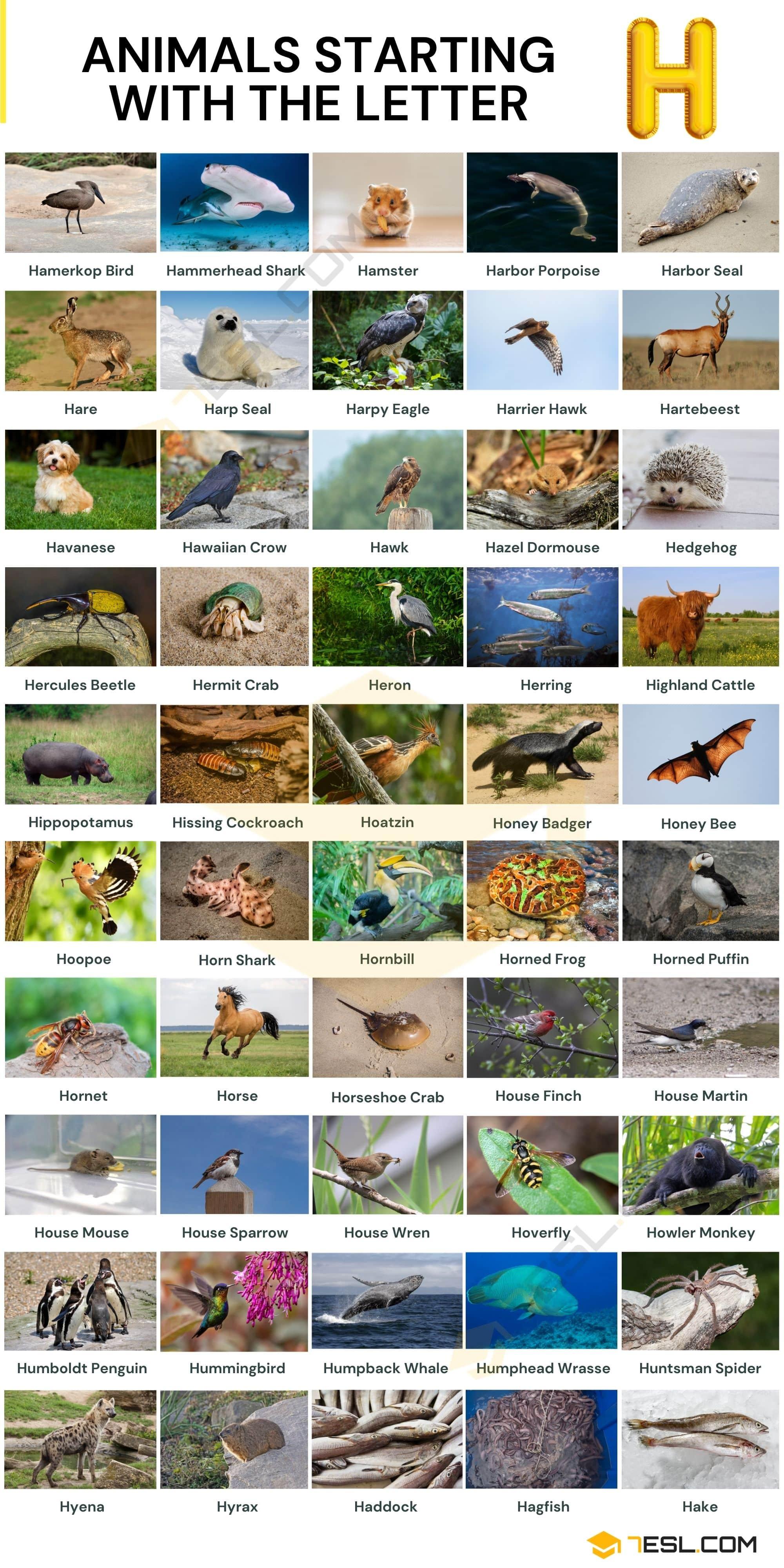 Animals that Start with H