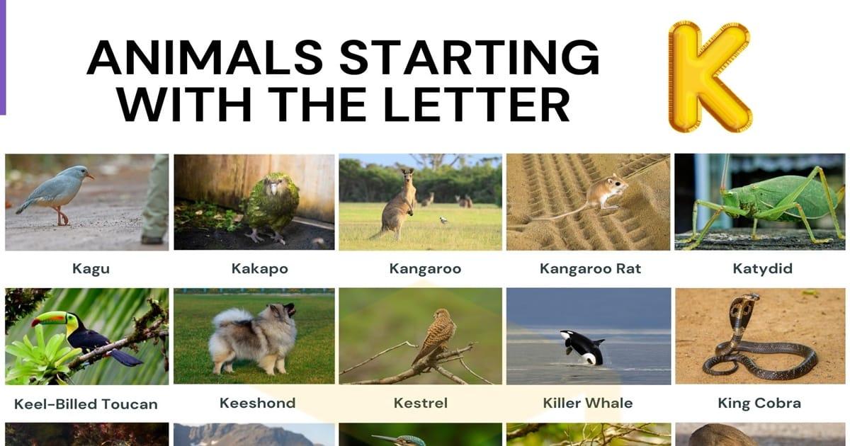 Animals that Start with K