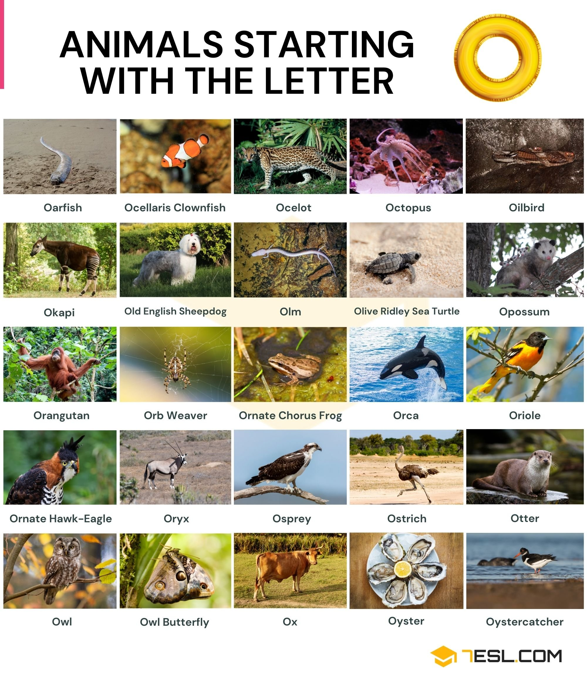 Animals that Start with O