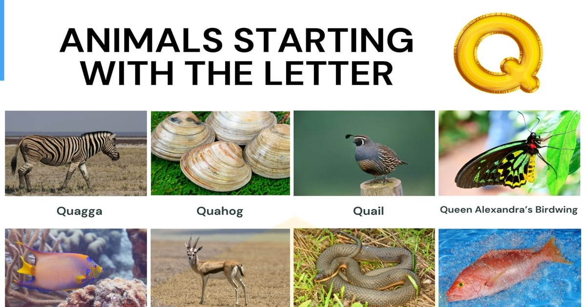 Animals that Start with Q