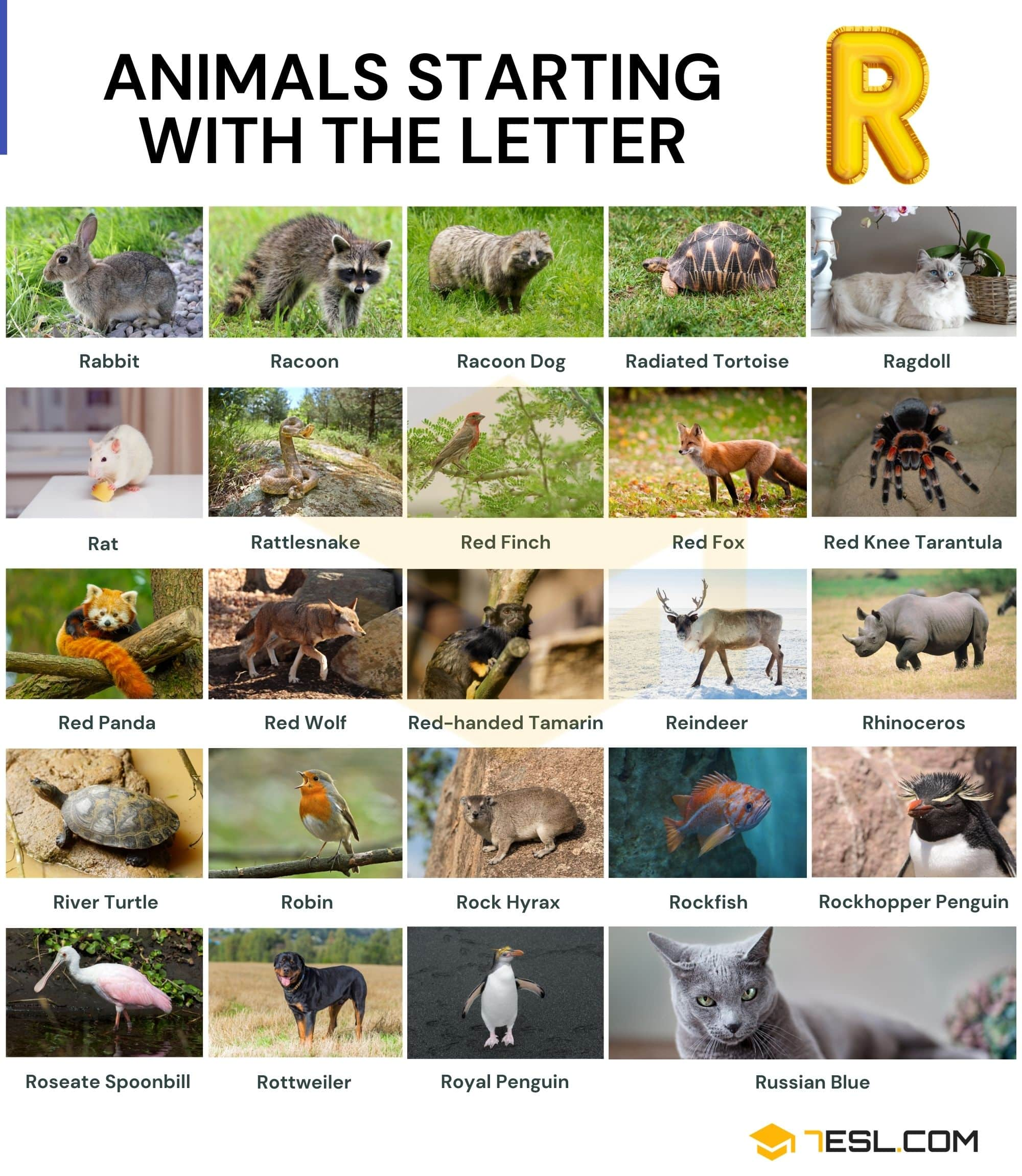 Animals that Start with R