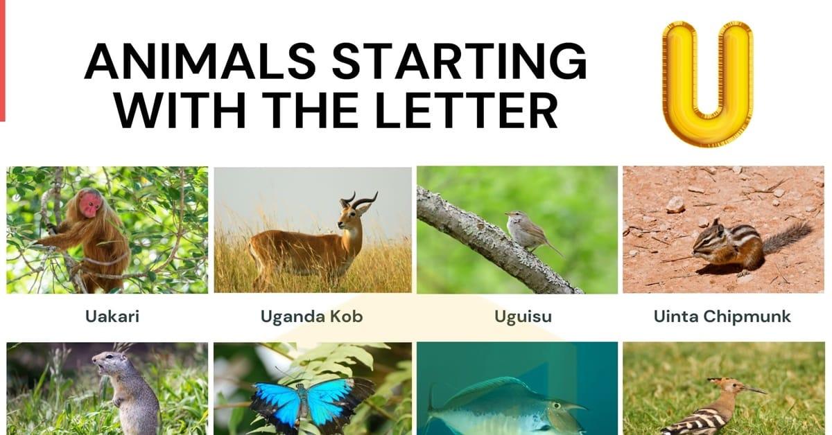 Animals that Start with U