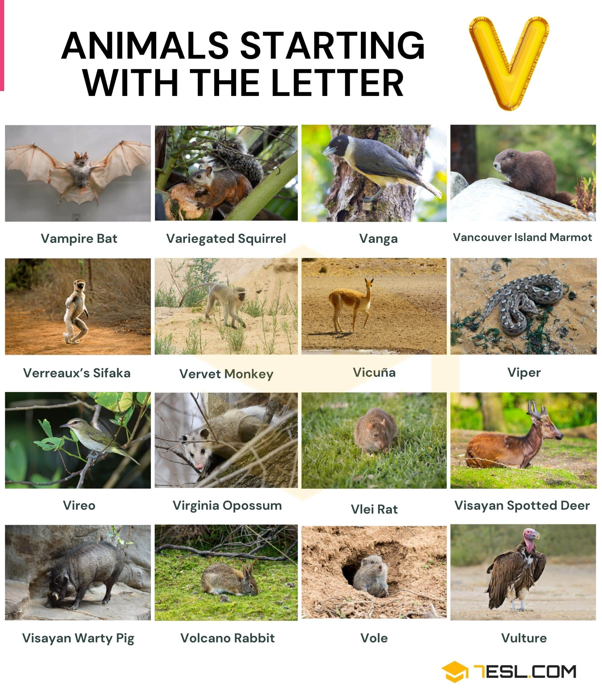 Animals that Start with V