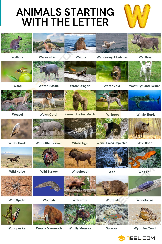 Animals that Start with W