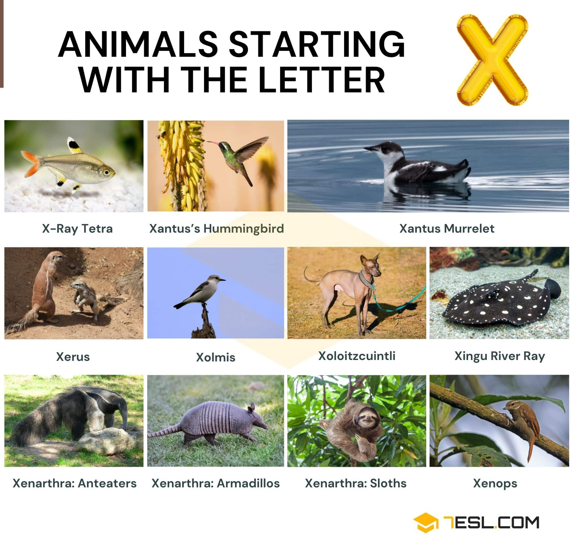 Animals that Start with X