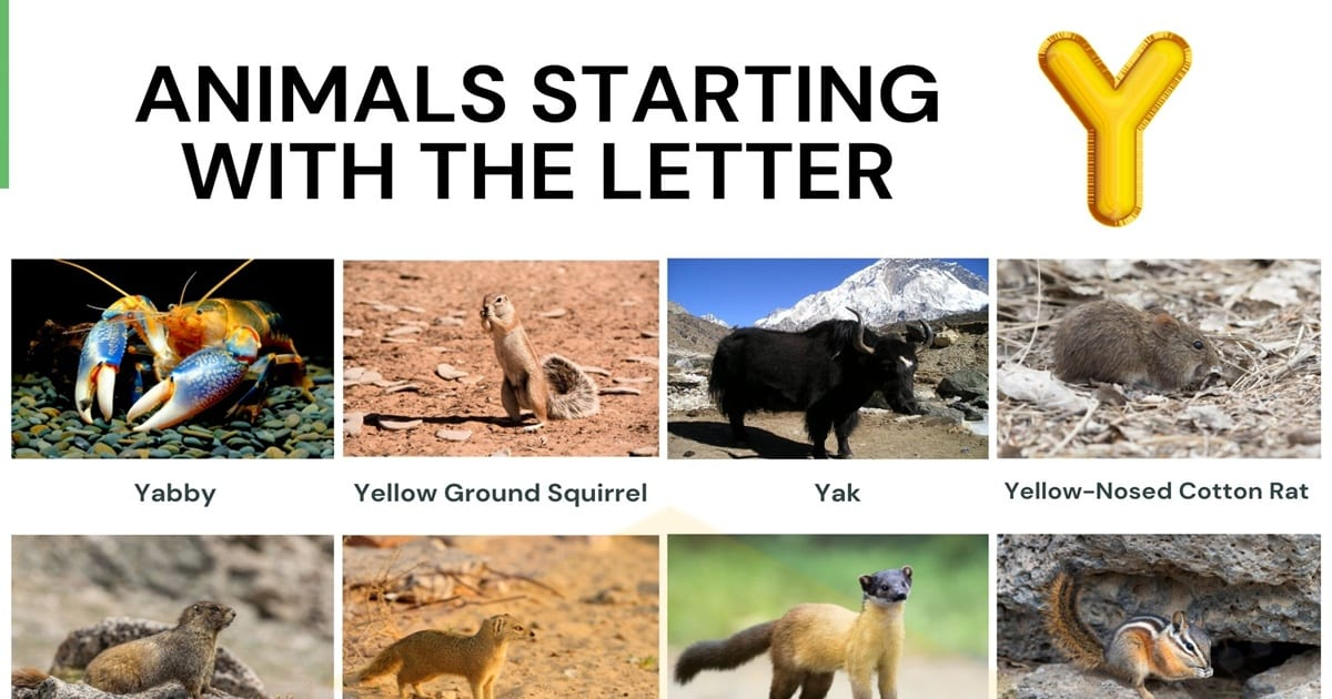 Animals That Start With Y Cool Names Of 17 Animals Starting With Y 7esl