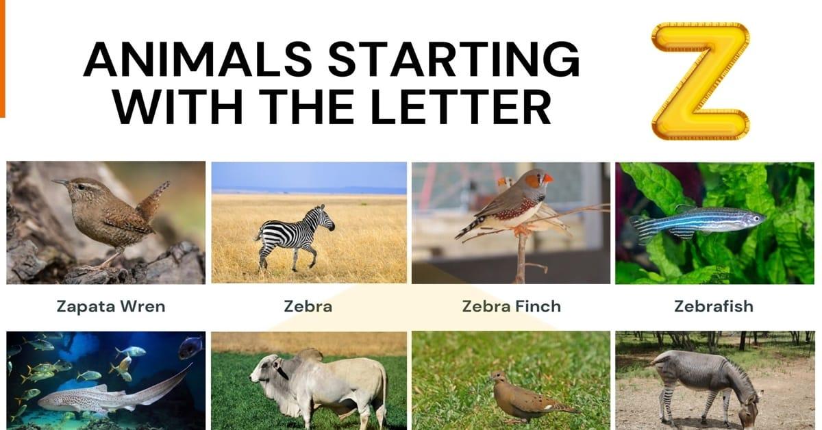 Animals that Start with Z