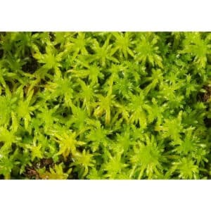 8 Different Types of Moss with Interesting Facts and Pictures 3