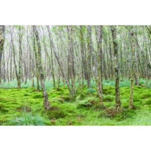 8 Different Types of Moss with Interesting Facts and Pictures 5