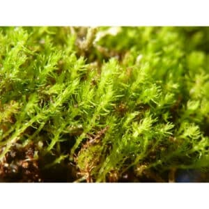 8 Different Types of Moss with Interesting Facts and Pictures 6