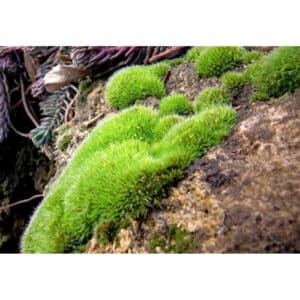 8 Different Types of Moss with Interesting Facts and Pictures 7