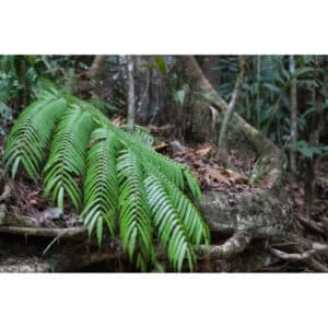 8 Different Types of Ferns with Interesting Facts and Pictures 8