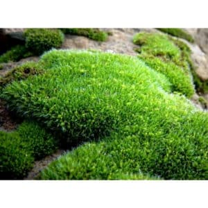 8 Different Types of Moss with Interesting Facts and Pictures 8
