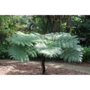 8 Different Types of Ferns with Interesting Facts and Pictures 9