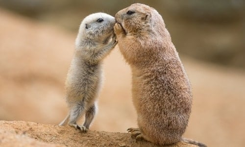 Cute Animals | 7 Cutest Animals in the World and Fun Facts about Them 3