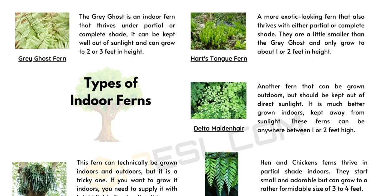 8 Different Types of Ferns with Interesting Facts and Pictures 1