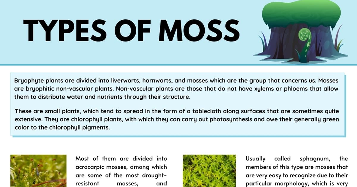 8 Different Types of Moss with Interesting Facts and Pictures 1