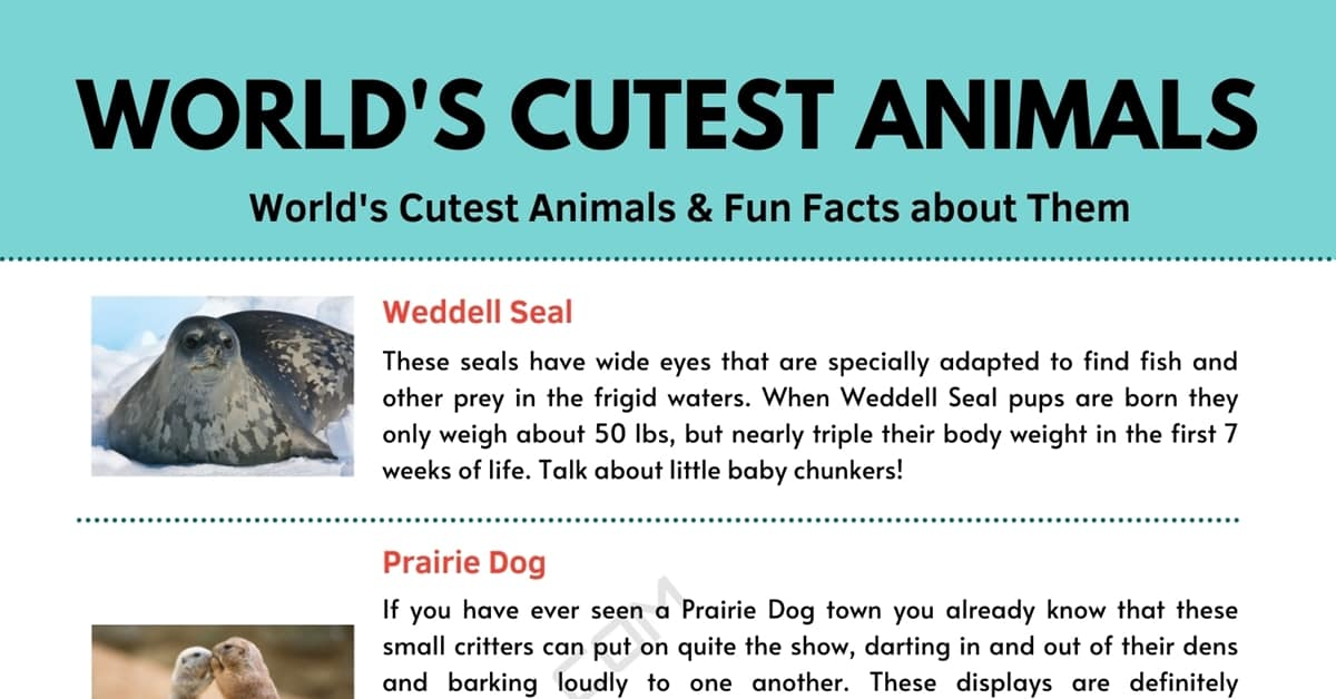 Cute Animals | 7 Cutest Animals in the World and Fun Facts about Them 1