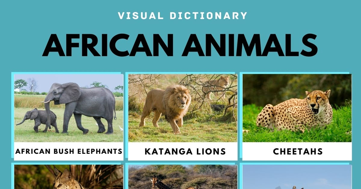 African Animals: List of African Animals with Fun Facts & Pictures 1