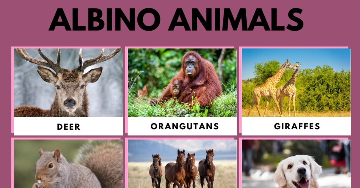 Albino Animals: What Are They and their Interesting Facts 1