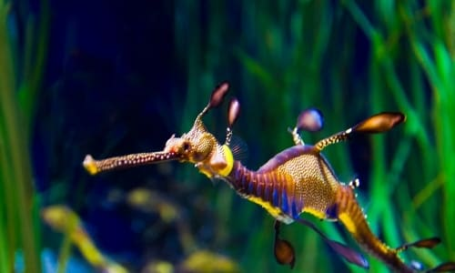 Deep Sea Creatures List with Amazing Facts and Pictures 8