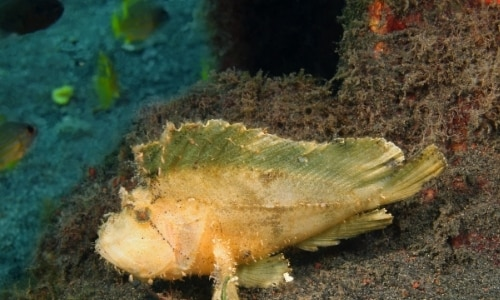 Deep Sea Creatures List with Amazing Facts and Pictures 3