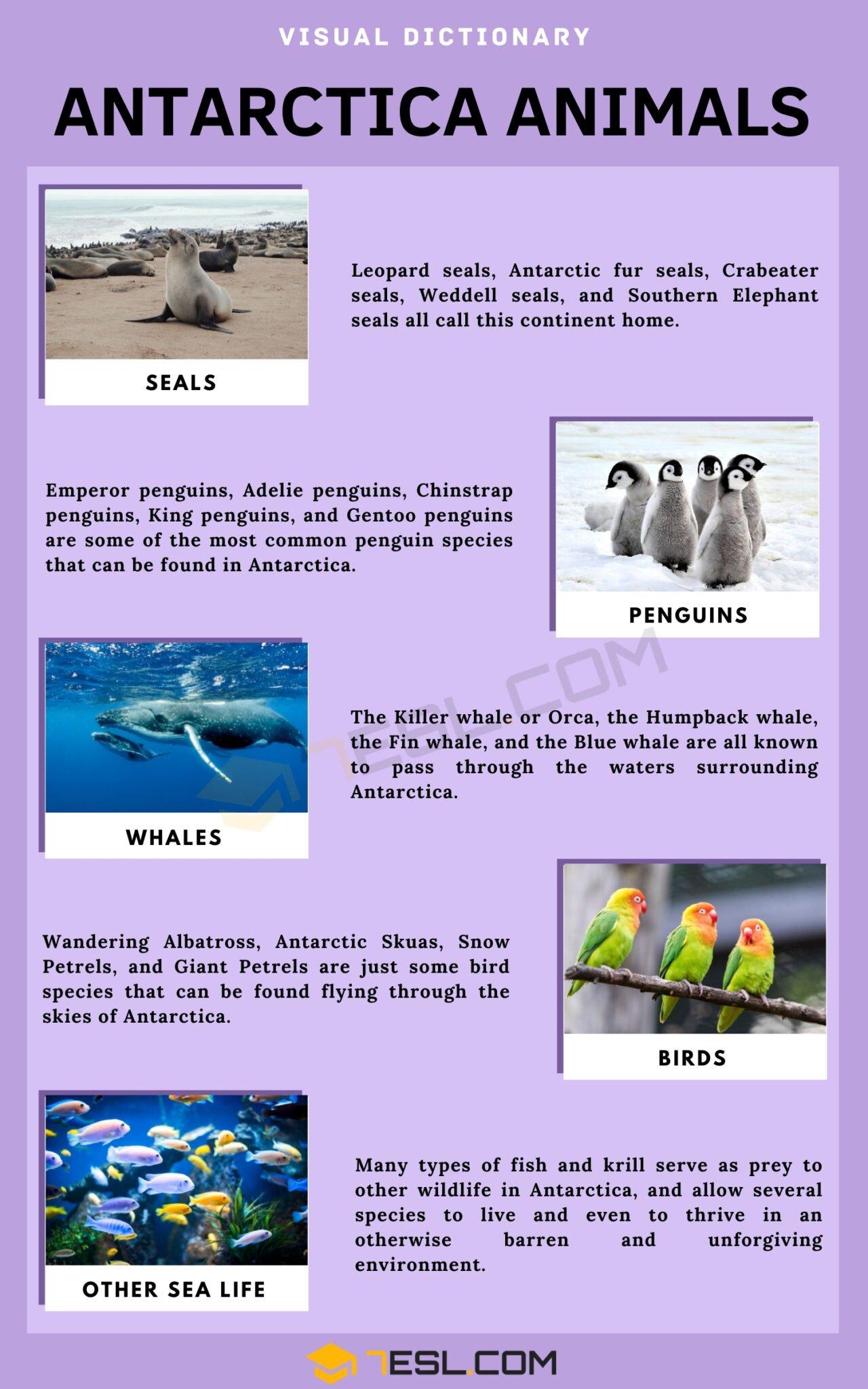 Antarctica Animals | List of Interesting Animals That Live In Antarctica