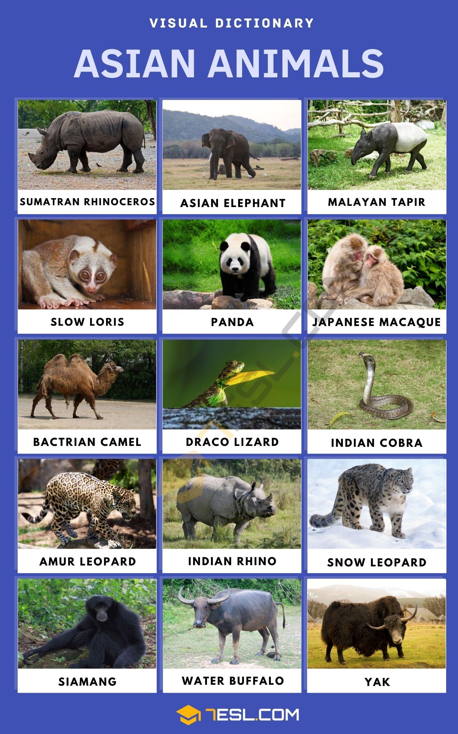 Asian Animals