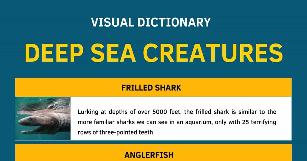 Deep Sea Creatures List with Amazing Facts and Pictures 1