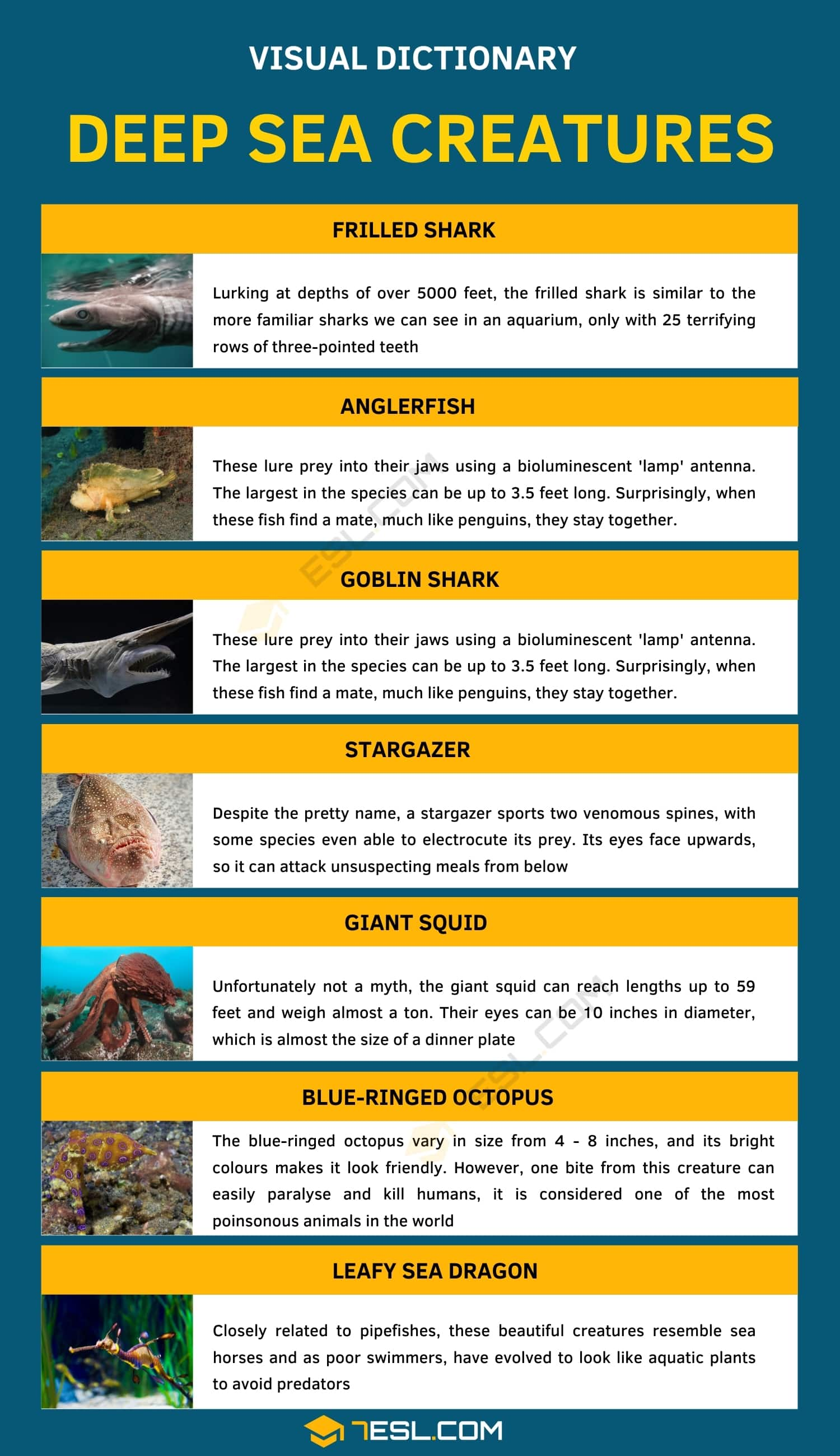 Deep sea Creatures   List of 7 Creatures from the Deep Sea