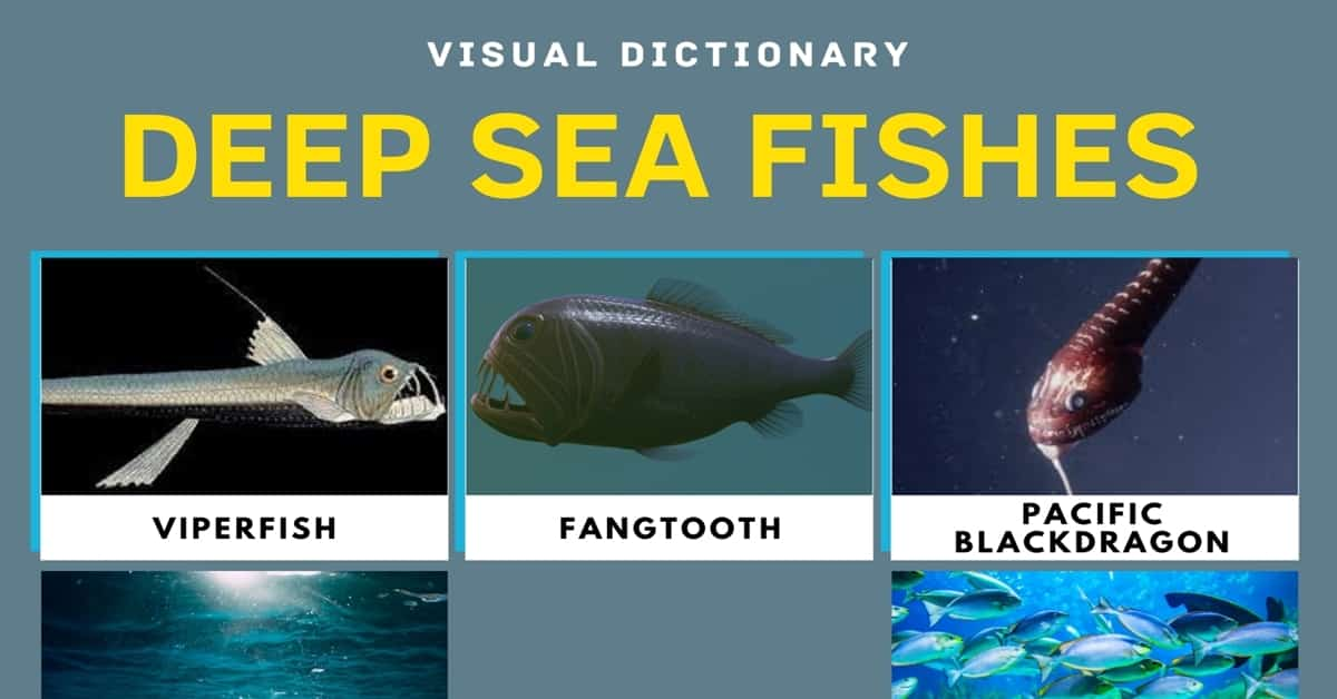 Deep Sea Fish | List of Fish that Live in the Deep Sea with Pictures 1