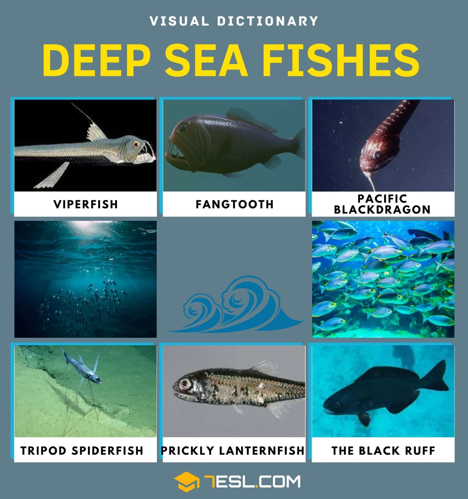 Deep sea Fish | Top of Fish that Live in the Deep Sea & Facts about Them