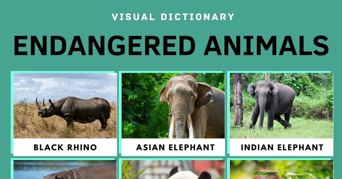 Endangered Animals: List of 15+ Endangered Animals with Facts 1