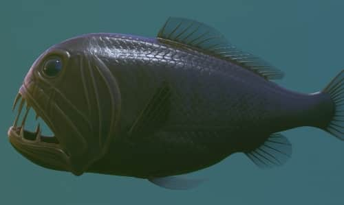 Deep Sea Fish | List of Fish that Live in the Deep Sea with Pictures 3