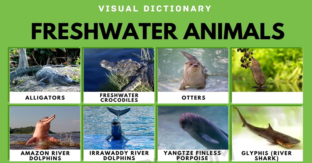Freshwater Animals   List of Freshwater Animals with Interesting Facts 1