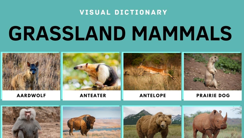 Grassland Animals: Animals Live in the Grassland (Prairies, Pampas) 1