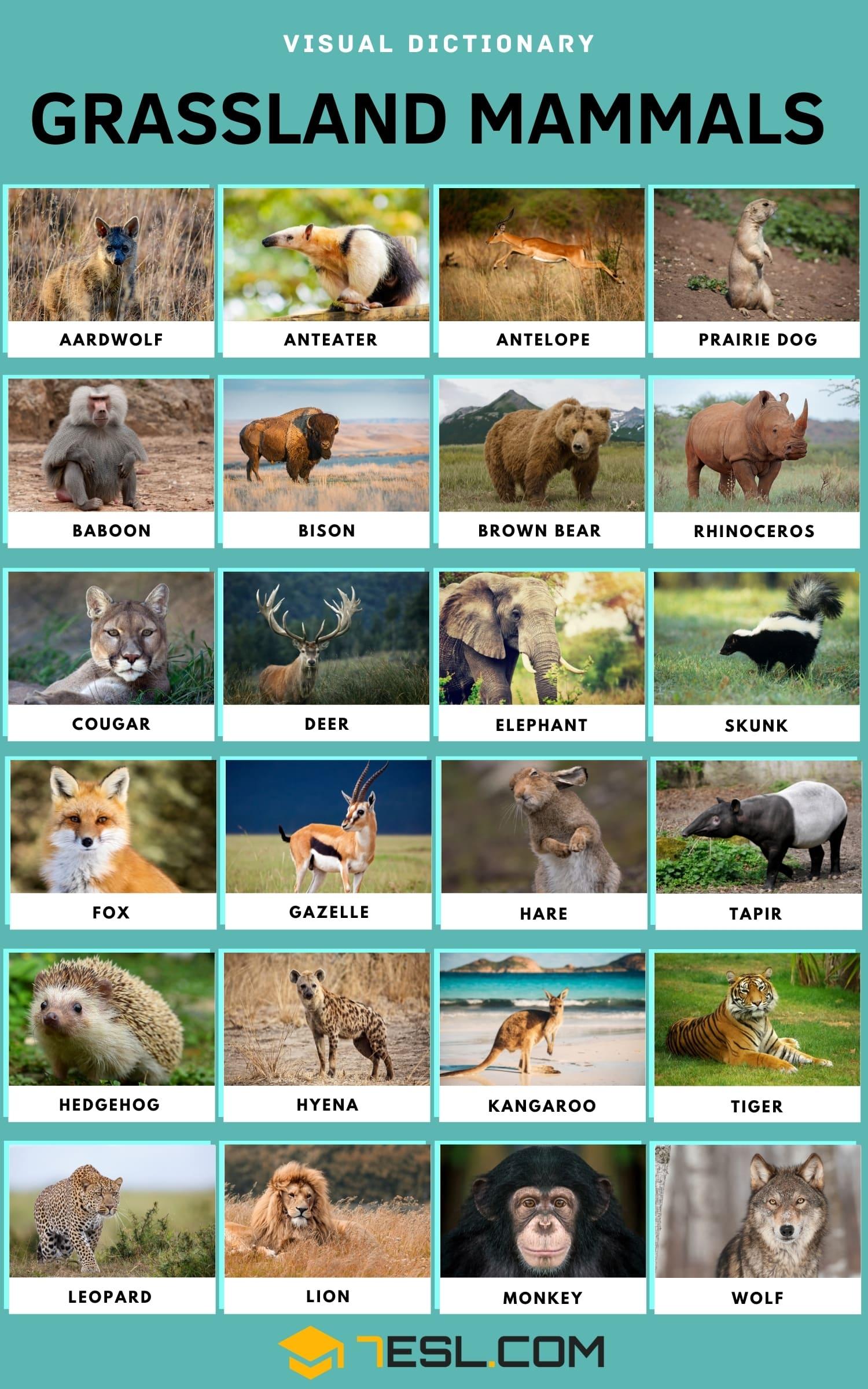 Grassland Animals - Grassland Mammals