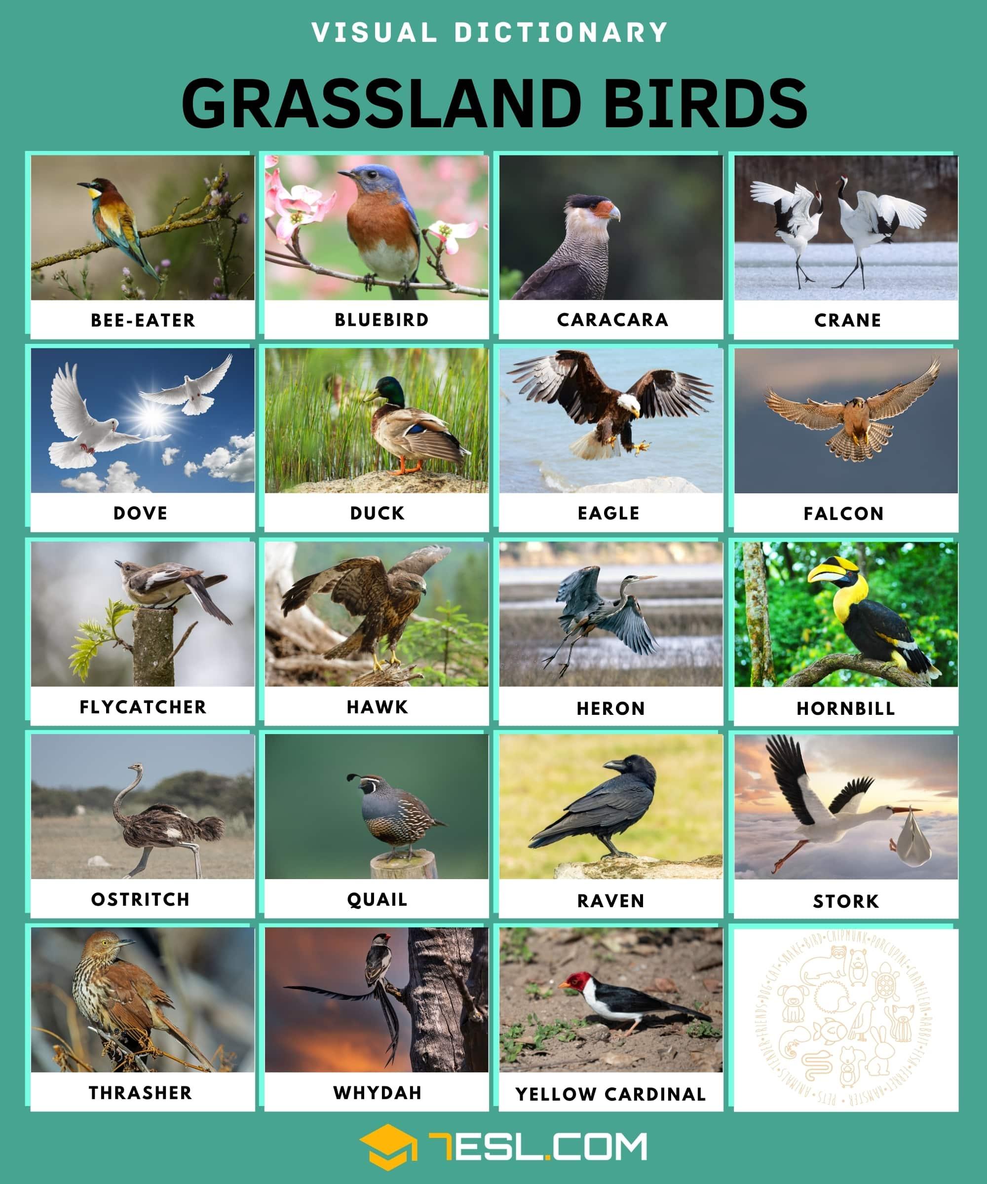 Grassland Animals: Animals Live in the Grassland (Prairies, Pampas) 2