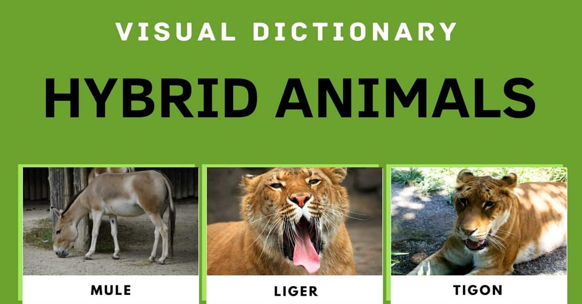 Hybrid Animals: List of Real Hybrid Animals with Cool Facts & Pictures 1