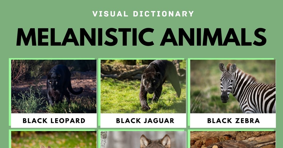 Melanistic Animals: What Are They and their Interesting Facts 1
